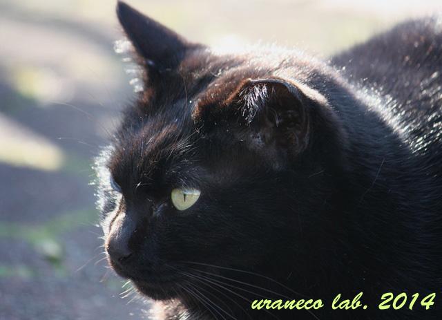 2月28日黒猫逆光2