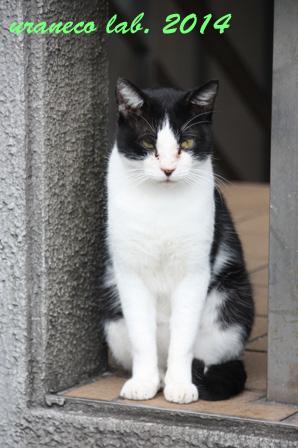 2月28日青山の猫2