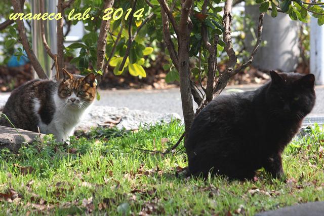 3月10日鯖虎白と黒