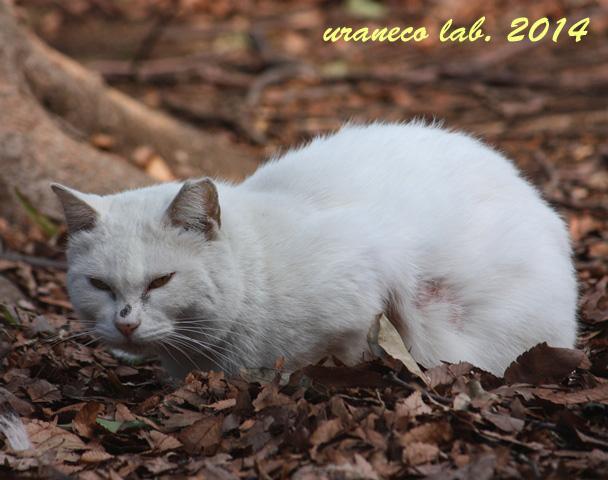 3月10日白猫