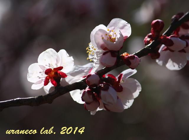 3月18日薄桃色5