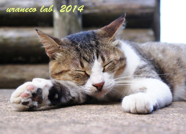 3月31日眠い猫2