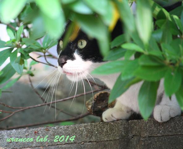 4月23日緑の中の猫