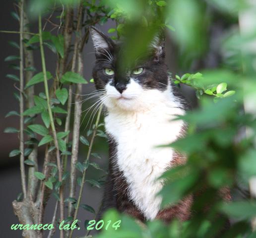 4月23日緑の中の猫3