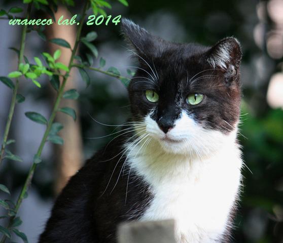 4月23日緑の中の猫4