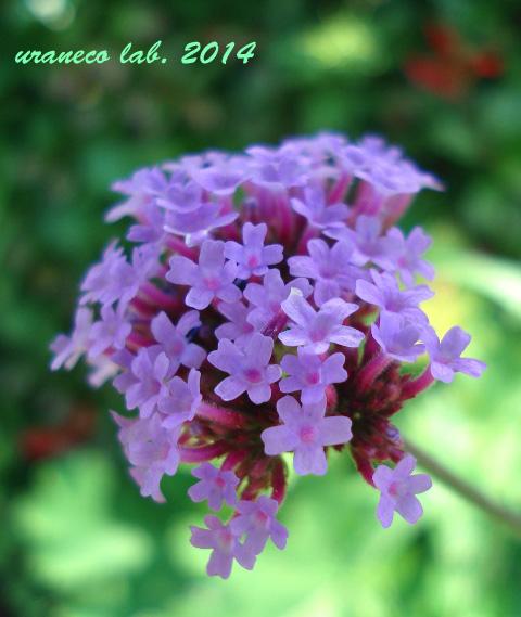5月27日紫色の小花