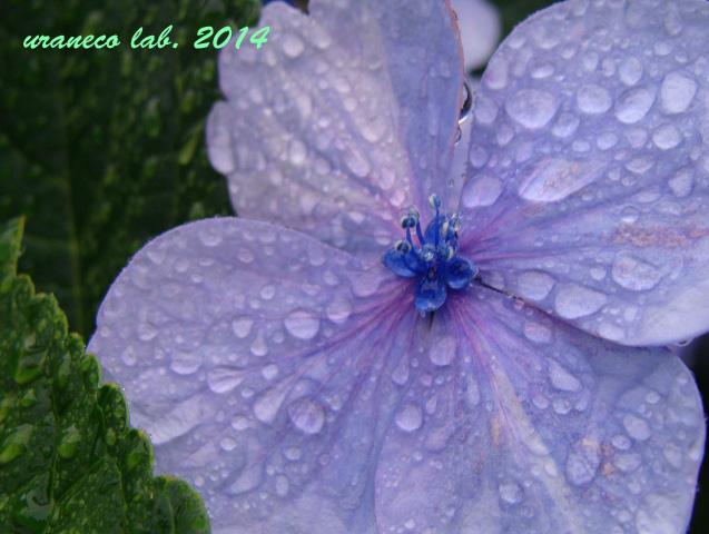 6月4日雨の日