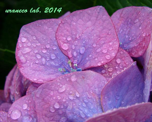 6月4日雨の日2
