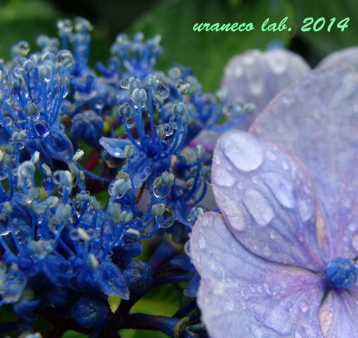 6月4日雨の日4