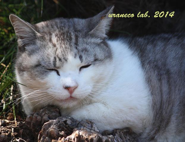 6月16日灰白縞猫3
