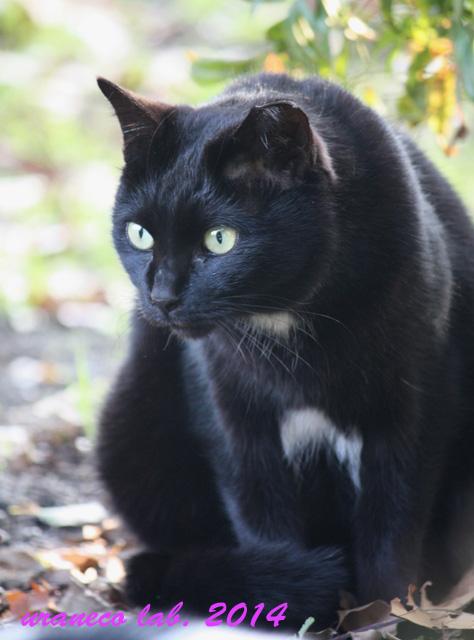 11月29日黒猫おひかえなすって