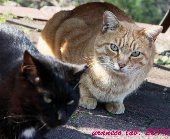 3月31日黒猫と茶虎