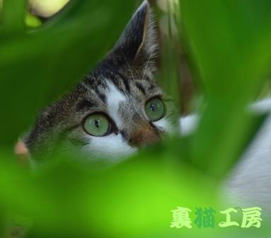 7月7日緑の中の猫