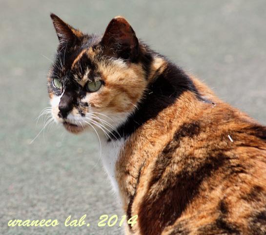 5月14日三毛猫2