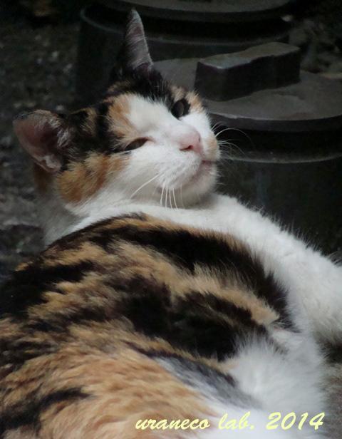 7月24日銀座の三毛猫5
