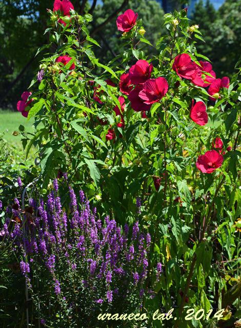 8月5日夏の庭