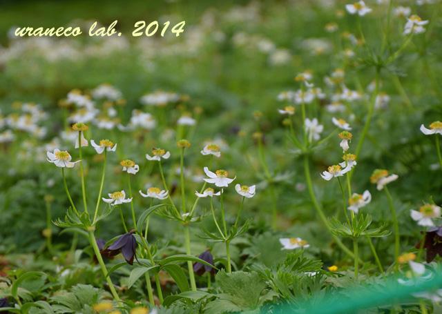 8月11日天空のお花畑4