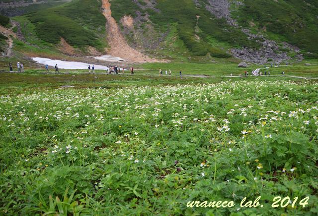 8月11日天空のお花畑5
