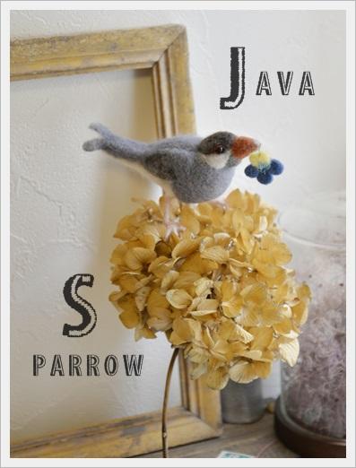 Java Sparrow2