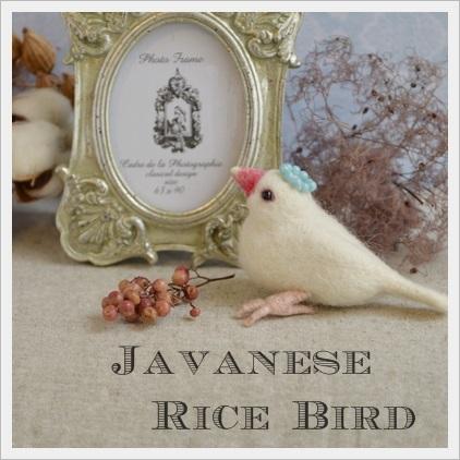 Javanese Rice Bird