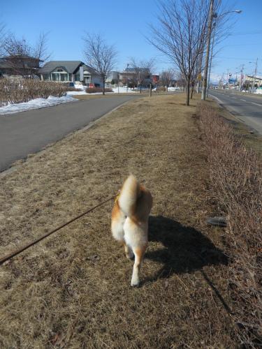 華の散歩道