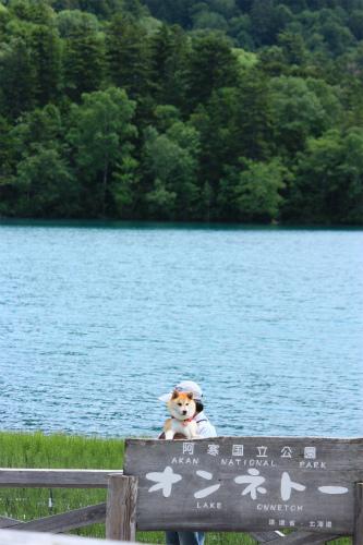 湖畔のはなび・オンネトー