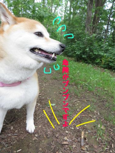 別犬か!?