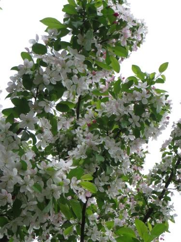 白い花なんだ!?