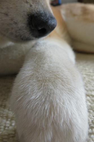 足だけシャンプー