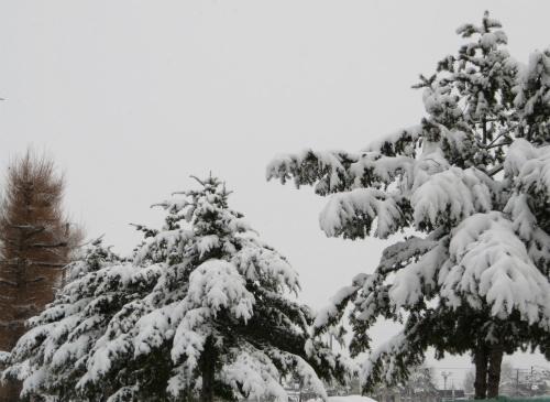 帯広年度末は雪