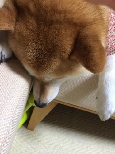 ギリギリの犬生
