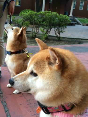 華と賢ちゃん