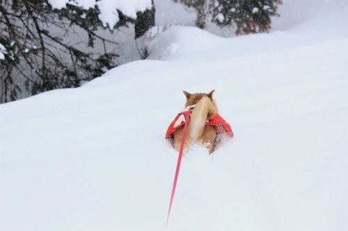 華ちゃん雪中行軍