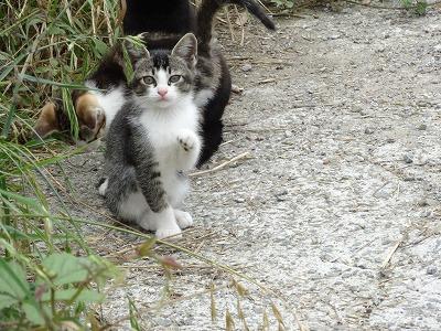 宇和島の猫 05