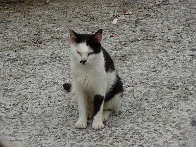 宇和島の猫 12