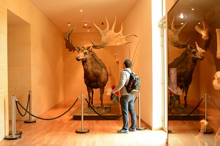 食べたい鹿20140703