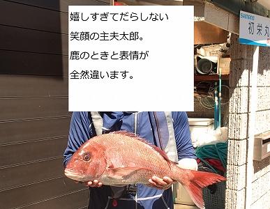 真鯛で嬉しい20140827