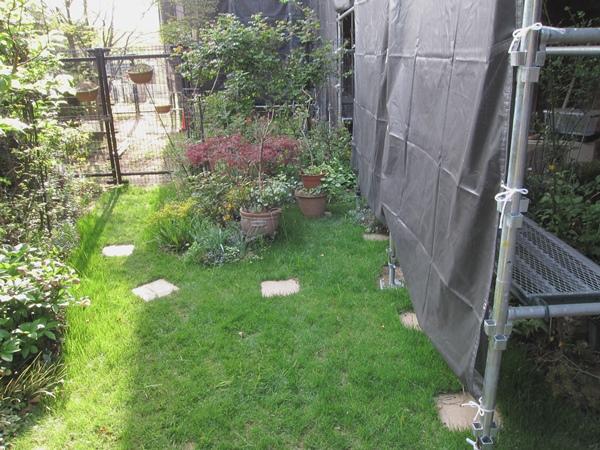 4月13日の庭1