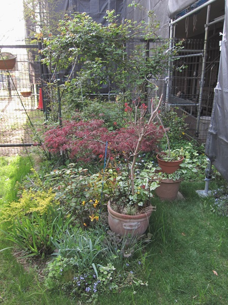 4月13日の庭2