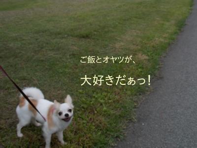 2014006705_8.jpg