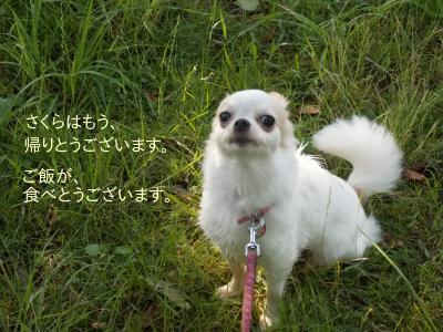 2014006709_11.jpg