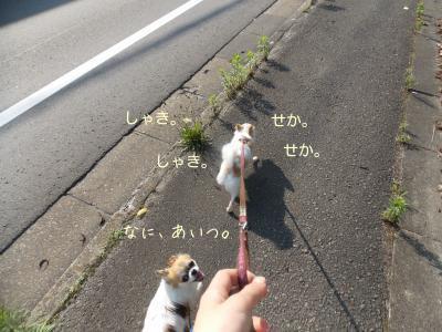 2014006709_12.jpg