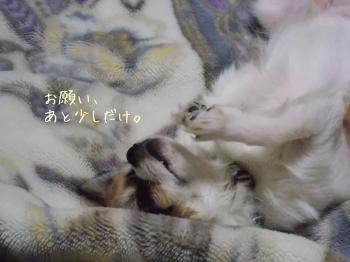 20140320_20.jpg
