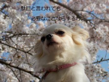 20140430_5.jpg
