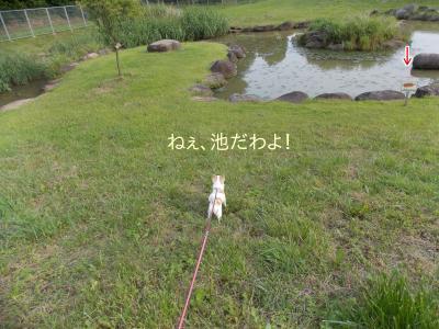 20140612_13.jpg