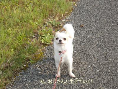 20140612_5.jpg