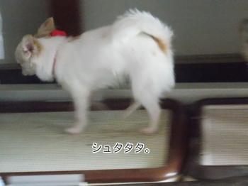 saku_4.jpg