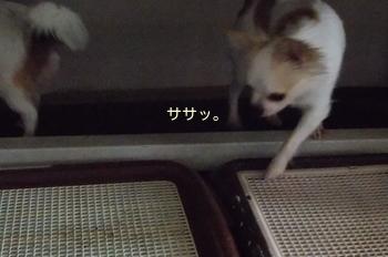 saku_9.jpg