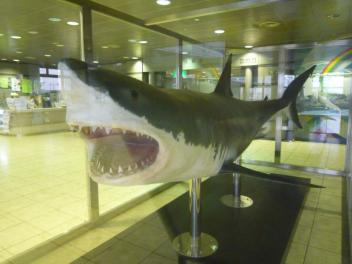 20140506サメ