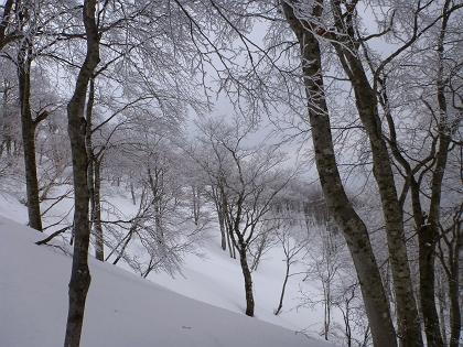 20140316荒島岳06